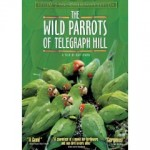 The Wild Parrots of Telegraph Hill - a documentary by Judy Irving
